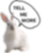 White_Rabbit-TELL_ME_MORE-removebg-previ