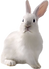 White_Rabbit-removebg-preview.png