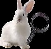 White_Rabbit-magnifying_glass-removebg-p