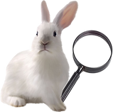 White_Rabbit-magnifying_glass-removebg-p