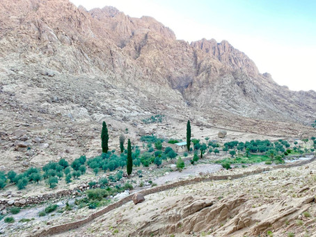 Postcard from Sinai