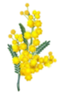wattle-removebg-preview.png