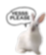 White_Rabbit-YES_PLEASE-removebg-preview