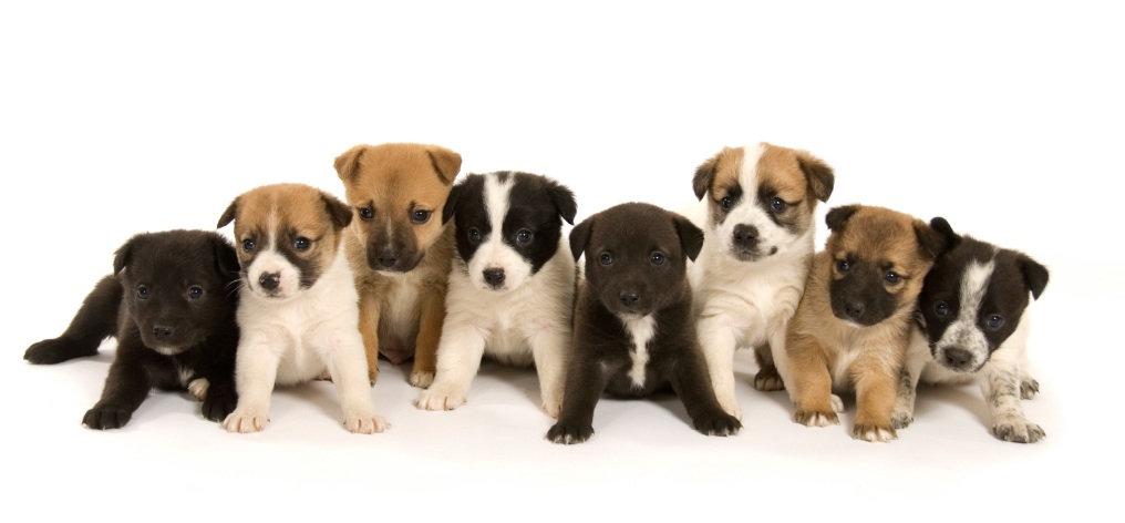 Puppy-Nutrition.jpg