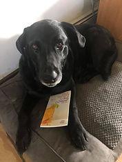 dog-book.jpg