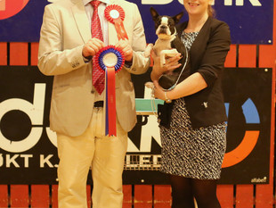 National Show - Varhaug - Sunny got her second CAC