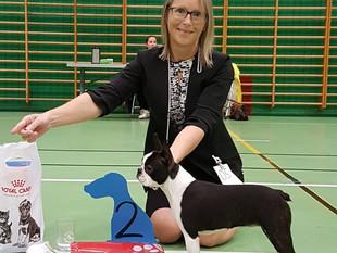 Puppy Show - Stord Norway - BIS 2 puppy