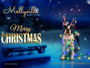 We wish everyone a merry Christmas!