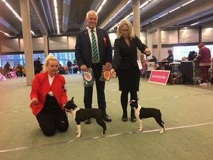 International Dogshow Dogs4All Norway