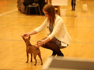 National Dog Show - Varhaug