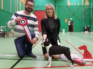 Puppy Show - Stord Norway - BIS!!