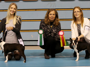 Puppy Show - Stord