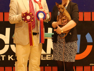 National Show - Varhaug - Leia got her second CAC and was BOB