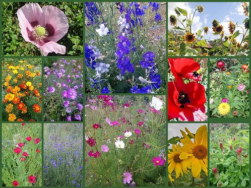 Sommerblumen-Paket - Samen-Paket mit 12 verschiedenen Einjährigen