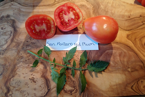 "Tomate ""San Marzano Red Plum"""