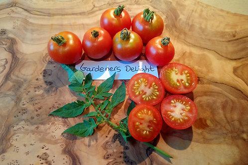 """Tomate""""Gardener's delight"""""""