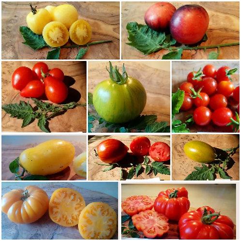 🍅Buntes Tomaten-Paket🍅 Groß