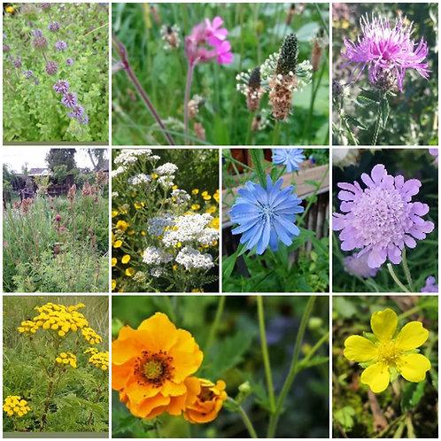 """Paket """"Heimische Wildpflanzen"""" - 10 verschiedene Arten"""