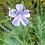 Thumbnail: Blauer Staudenlein (Linum perenne)