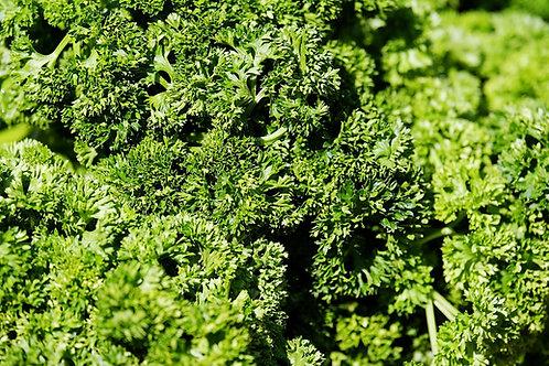 Petersilie (Petroselinum crispum) 'Mooskrause'