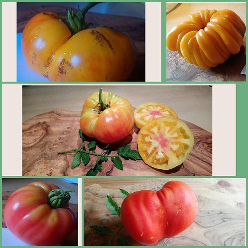 """Tomaten-Paket """"Fleischtomaten"""""""