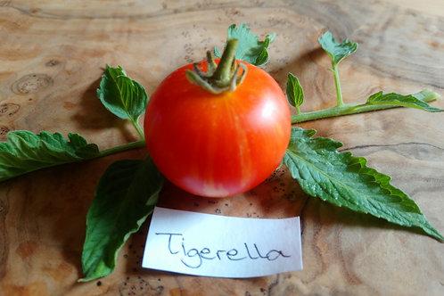 """Tomate """"Tigerella"""""""