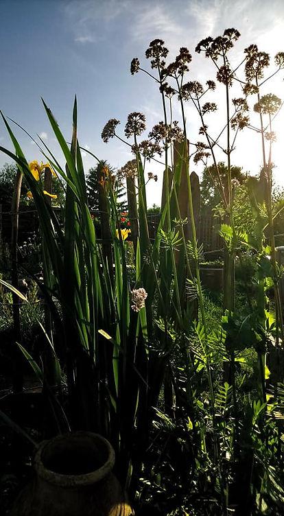 Bio Saatgut Blumesamen