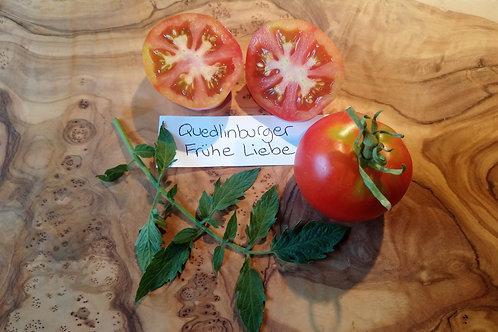 "Tomate ""Quedlingburger frühe Liebe"""