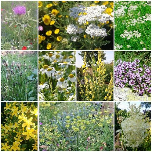 Samen-Paket - 10 verschiedene Heilpflanzen
