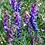 Thumbnail: Zottige Wicke (Vicia villosa)
