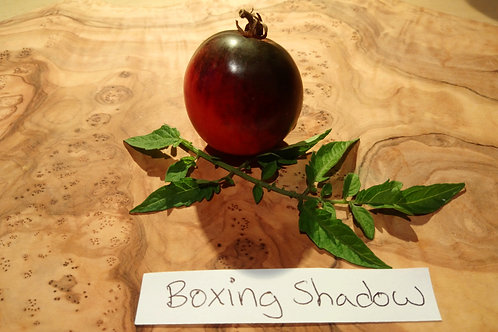 "Tomate ""Boxing Shadow"""