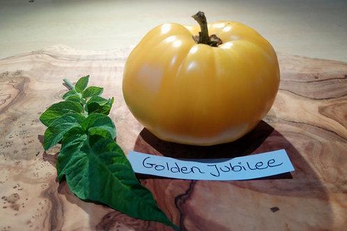 """Tomate """"Golden Jubilee"""""""