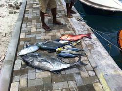 Fishing | Acqua Blu Rasdhoo