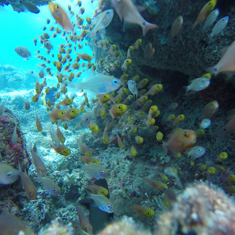 Reef | Acqua Blu Rasdhoo