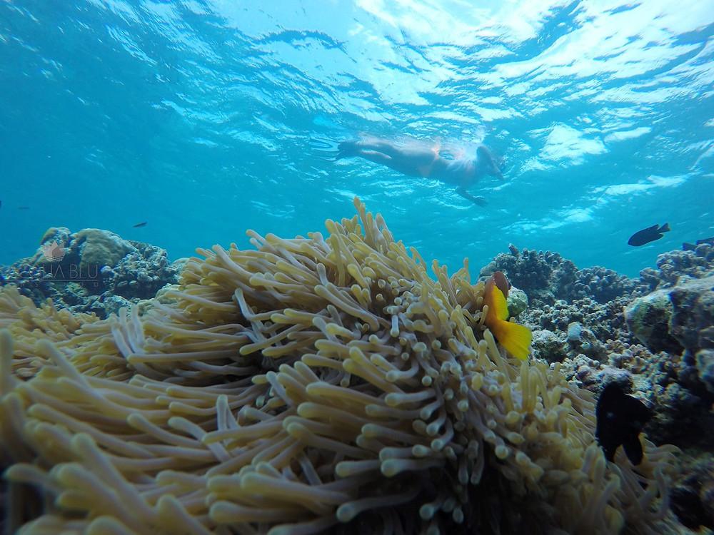 Snorkeling | Acqua Blu Rasdhoo