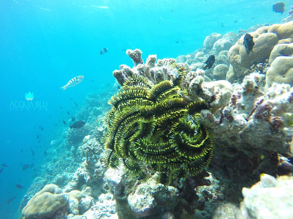 Rasdhoo Reef | Acqua Blu Rasdhoo