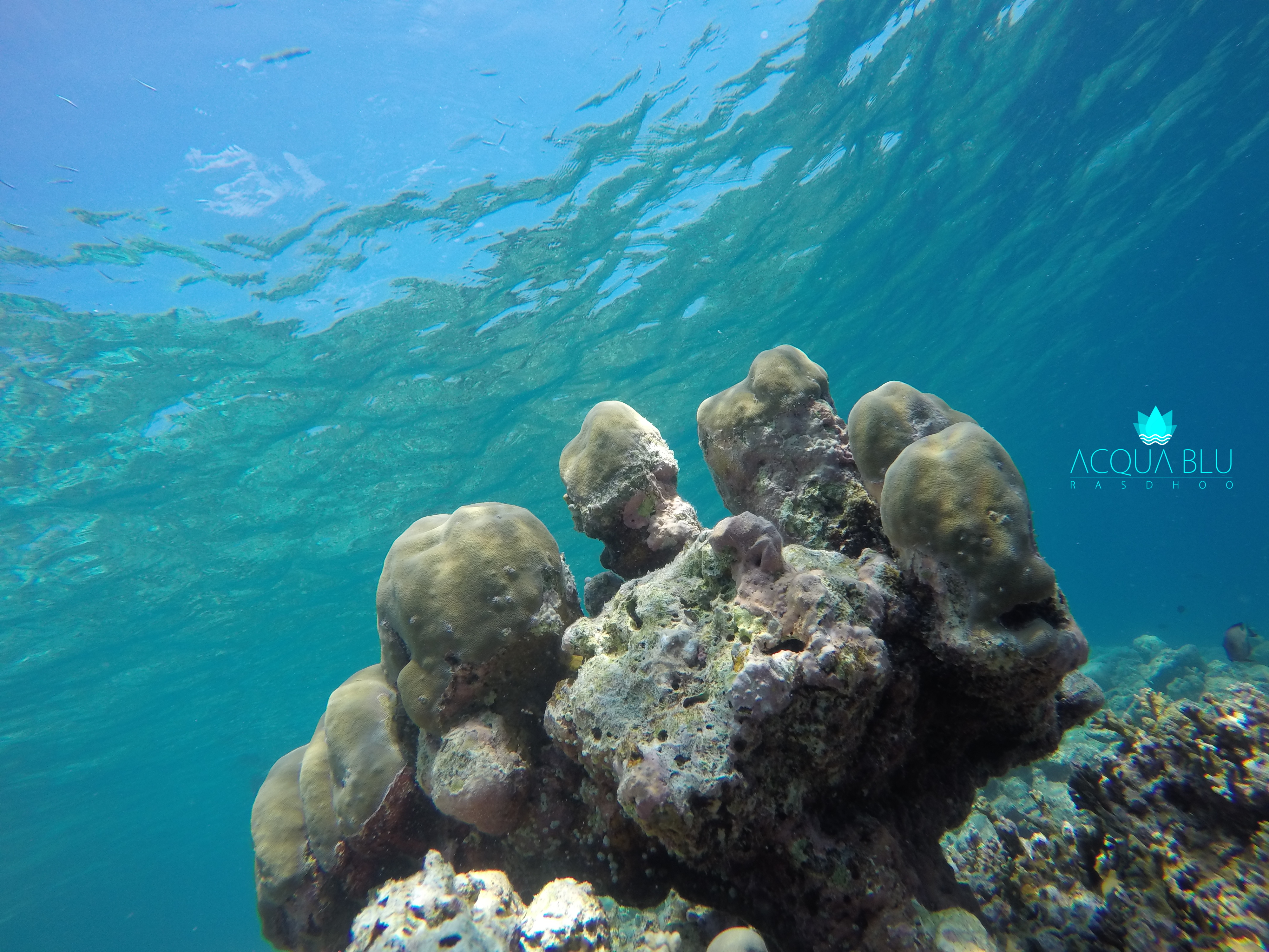 Snorkeling Photos | Acqua Blu Rasdho