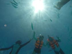 Fish Feeding  | Acqua Blu Rasdhoo
