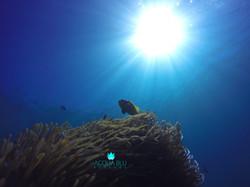Snorkeling Photos | Acqua Blu Rasdho
