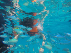 Fish Feeding | Acua Blu Rasdhoo