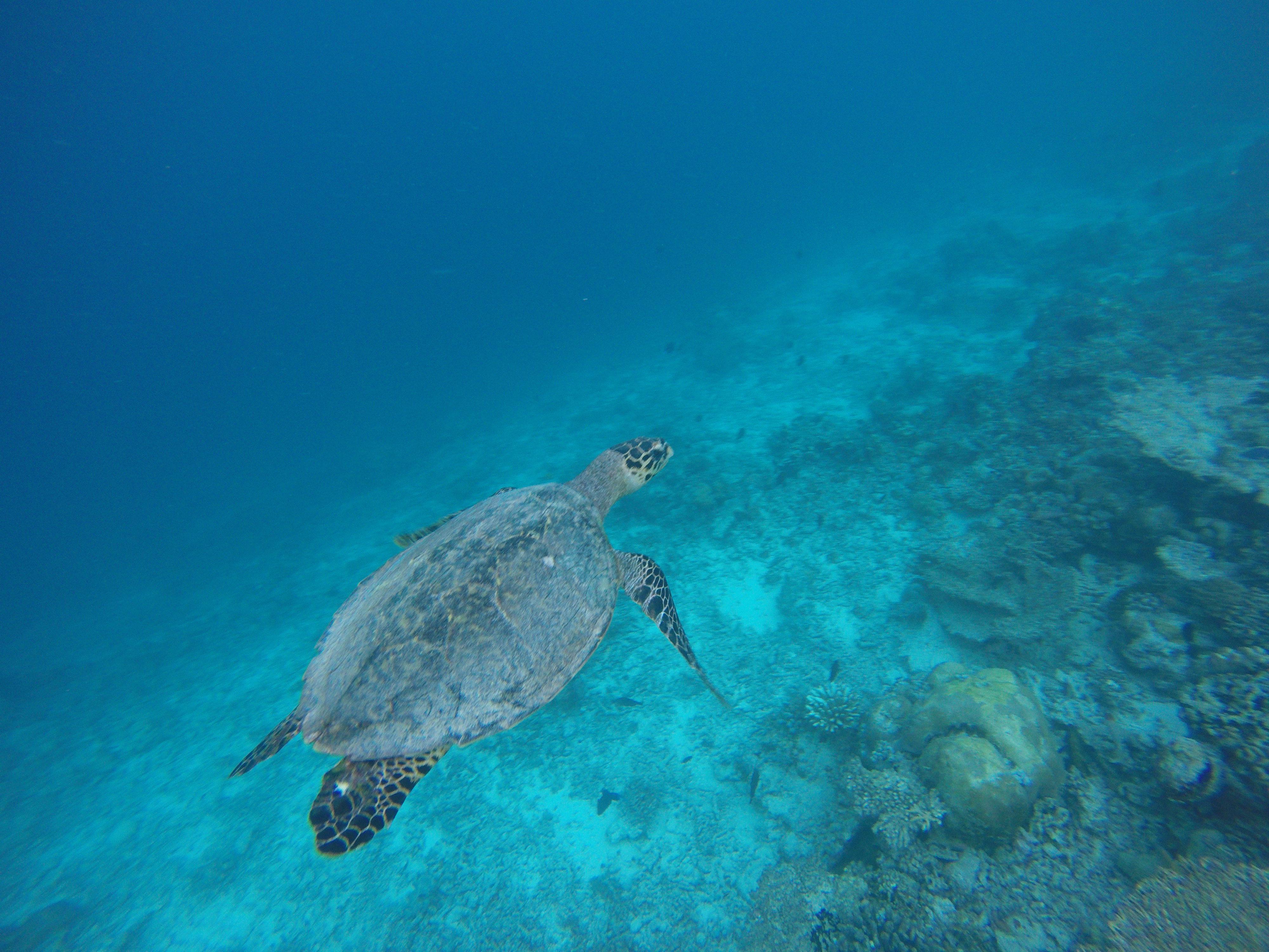 Turtle Quest | Acqua Blu Rasdhoo