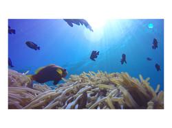 Snorkeling Around Rasdhoo