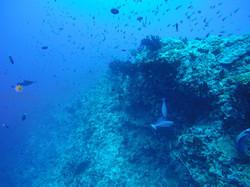 Rasdhoo Reef | Acua Blu Rasdhoo