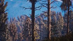 The_Pit_Landscape.0143.jpg