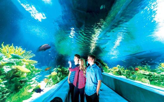 great-barrier-reef-tunnel.jpg