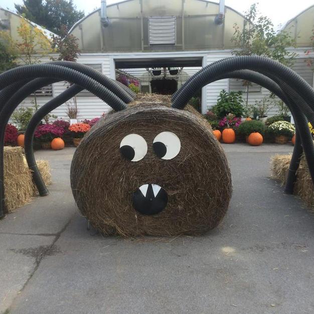 Hay Bale Spider