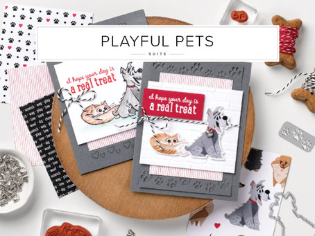 Playful Pet Suite