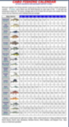 Cabo Fishing Calender .png