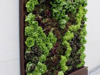 """""""Jardines verticales, cambiando los usos del espacio"""""""