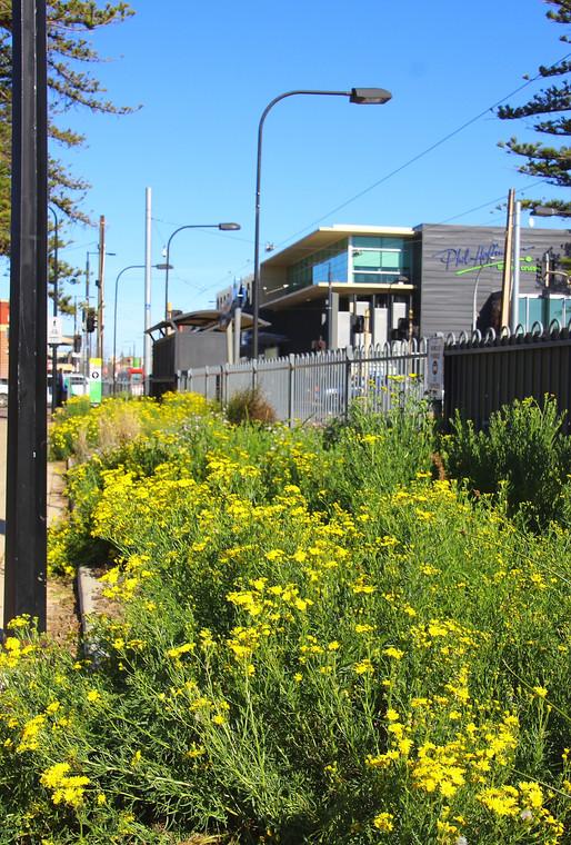 Planting design - Mike Turtur Bikeway